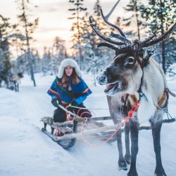 Švedska Laponija. Izvor: Asaf Kliger/www.nutti.se/imagebank.sweden.se