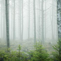 Sjeverna Švedska. Izvor: Sara Ingman/imagebank.sweden.se
