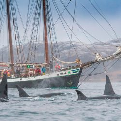 Promatranje kitova.