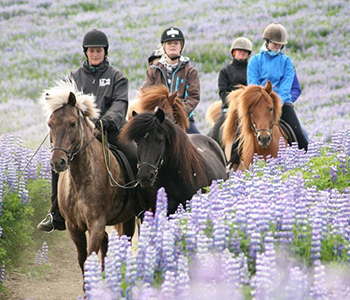 horse-riding-caving-3