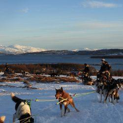 Husky safari u Norveškoj. Izvor: Nordic Point