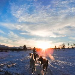 Husky Safari, Tromso. Photo by: Nordic Point