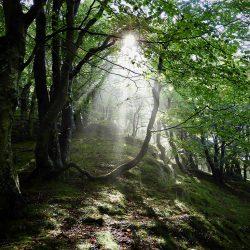 Švedske šume. Izvor: Nordic Point